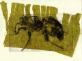antgrass